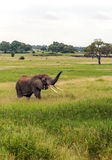 Meadows of Tanzania with elephant Stock Photography