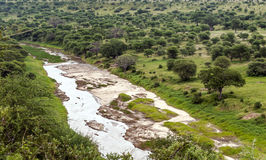 Meadows of Tanzania with river. Meadows of Tanzania with acacias and river on a cloudy day Royalty Free Stock Photo