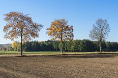 Autumn landscape along Romantic Road, Buchdorf, Germany. Meadows, tree with brown leaves and road in Burchdorf, Germany, Europe. Blue sky and space for text stock images