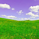 Meadows of Tuscany Royalty Free Stock Images