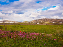 Meadows with wild flowers and grass and beautiful sky with cloud Royalty Free Stock Photo