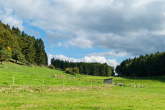 Meadows between Winterkopf and Weddelberg Stock Photo
