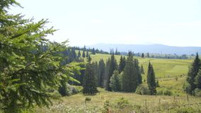 Meadows and woods in the middle of the mountains. Hills stock footage
