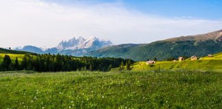 Meadows with yellow flowers in the Dolomites at sunset Stock Photo