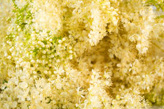 Meadowsweet background Royalty Free Stock Photography