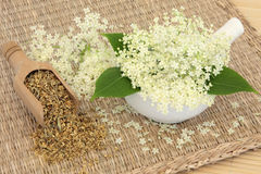 Meadowsweet Herb. Flowers dried and fresh used in natural alternative medicine. Filipendula ulmaria Royalty Free Stock Photos