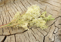 Meadowsweet. On old wooden background Royalty Free Stock Photos