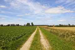 Meadowsweet and sugar beet farm track Stock Photography