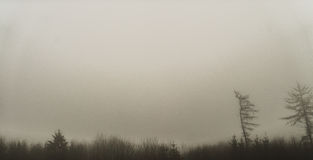 Meager landscape with fog. Morning fog in black and white forest Stock Photo