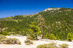 Meager Trees on rockets in the Yosemite national Park Royalty Free Stock Image