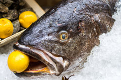 Meagre fish with a lemon in the mouth Royalty Free Stock Photography
