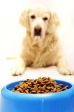 Meal time for dog Royalty Free Stock Photo