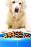 Meal time for dog Stock Photo