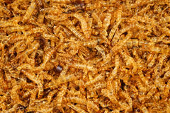 Meal worm dead Royalty Free Stock Photography