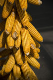 Mealie Stock Photography