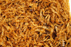 The mealworm dead Royalty Free Stock Photography
