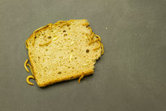 Mealworm eat bread Stock Photography