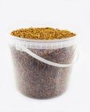 Mealworms Fotografia Royalty Free