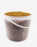 Mealworms Royalty Free Stock Photography