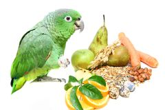Mealy Amazon parrot eating on white Stock Photos