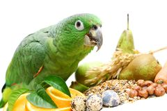 Mealy Amazon parrot eating on white Stock Photo