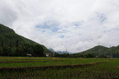 Rice field. The mean area for planting Rice or rice terraces The tiller to the soft soil. Exhume and soil surrounding the dam to hold the water back feed crops Stock Photography