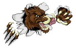 Mean Boar Warthog Razorback Mascot Stock Photos