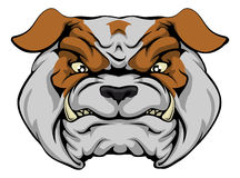 Mean Bulldog Royalty Free Stock Image