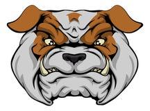 Mean Bulldog. A mean bulldog dog character or sports mascot staring forward Royalty Free Stock Image