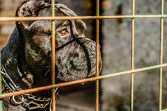 Mean dog looking through the fance. Black dog looking through the fence stock photos