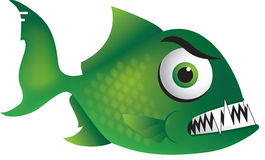 Mean Green Piranha. Fish with sharp teeth Royalty Free Stock Images