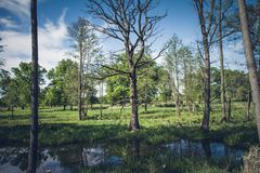 Meander cutoff of a river. Meander cutoff of The Bug River, Poland royalty free stock photo