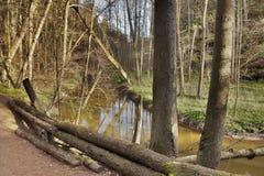 Meander Robersky potoka zatoczka w wiosny Peklo dolinie czeski regionu turystycznego Machuv kraj Zdjęcie Royalty Free