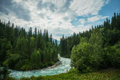 Meandering. The meandering aqua waters of the fRobson River near Mount Robson, British Columbia, Canada Royalty Free Stock Images