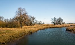 Meandering creek in a nature reserve. Meandering creek in a Dutch National Park on a sunny day at the end of the winter season. The grass and the reed plants are Royalty Free Stock Images