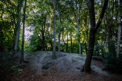 Meandering footpath through an autumn forest. With shady trees and dried fallen leaves on the ground Stock Photo