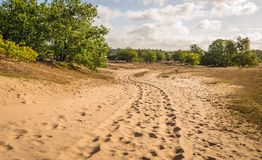 Meandering Sand Path Through A Dutch National Park With Shiftin Royalty Free Stock Images