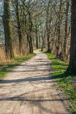 Meandering sandy path between tall trees. Meandering sandy path between bare tall trees in a Dutch forest in the beginning of the spring season Stock Images