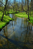 Meandering Stream Royalty Free Stock Photo