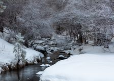 A meandering stream is flanked by snow covered banks and comes out from under snow covered bushes royalty free stock image