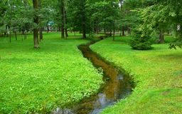 Meandering stream in a green forest Royalty Free Stock Photography