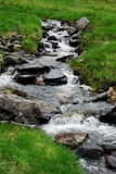 Meandering stream in green grass. Stock Photography