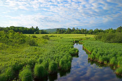 Meandering stream in rural Maine. A slow moving stream with reflection of the sky through the rural lush countryside of Maine in the summertime Stock Photo