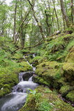 Meandering Water. A little brook meandering through the ancient woodland of Dartmoor National Park. Taken on a summers hike on the moorland Royalty Free Stock Images
