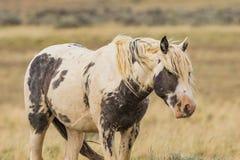 Meandering Wyoming strumień zdjęcia royalty free