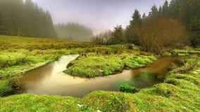 Meanderu strumyk w trawie zdjęcie wideo