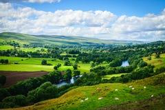 Meandrando o rio que faz sua maneira com rural verde luxúria Imagem de Stock