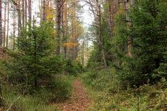 meandring的道路在森林里 库存图片