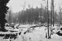 Meandro caído das árvores próximo da angra do potok de Robecsky no vale nevado de Peklo do inverno na região do kraj de checo Mac Fotografia de Stock