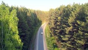 Meandros del camino de la visión aérea entre bosque conífero ligero almacen de video